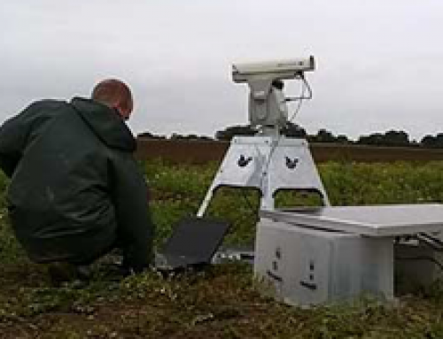 Lasers prove to be efficient pigeon deterrent in farm trial