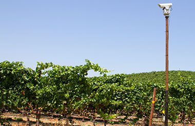 Laser bird repellent solves bird problem in wine grape industry