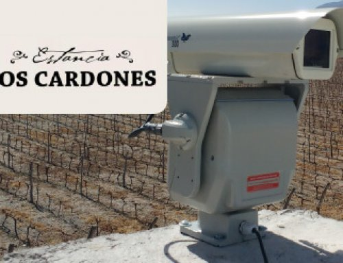 Laser bird deterrent protecting high quality wine grapes