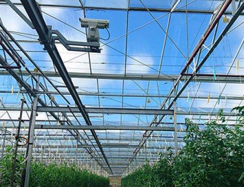 Bird Dispersal Laser Helps Greenhouse Owners Prevent Bird Damage