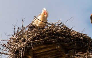 Prepare for nesting season