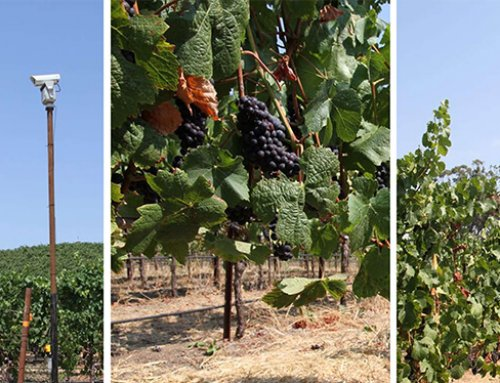 Top 5 Tips to Implement Effective Bird Control at Your Vineyard