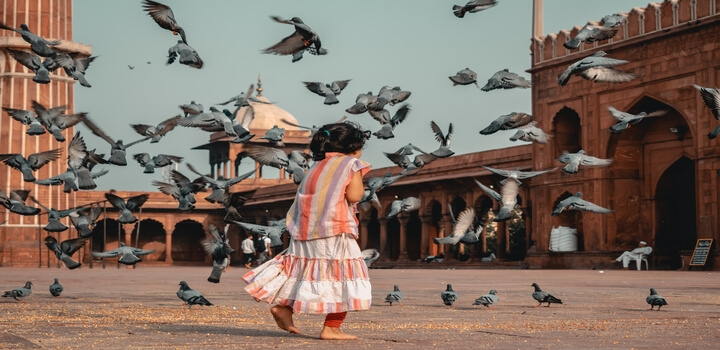 rsz_animals-avian-back-view-2091074