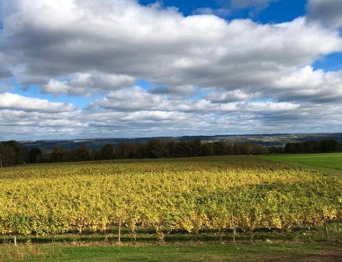 Airy Acres Vineyard protected their harvest successfully from bird damage using the laser bird deterrent