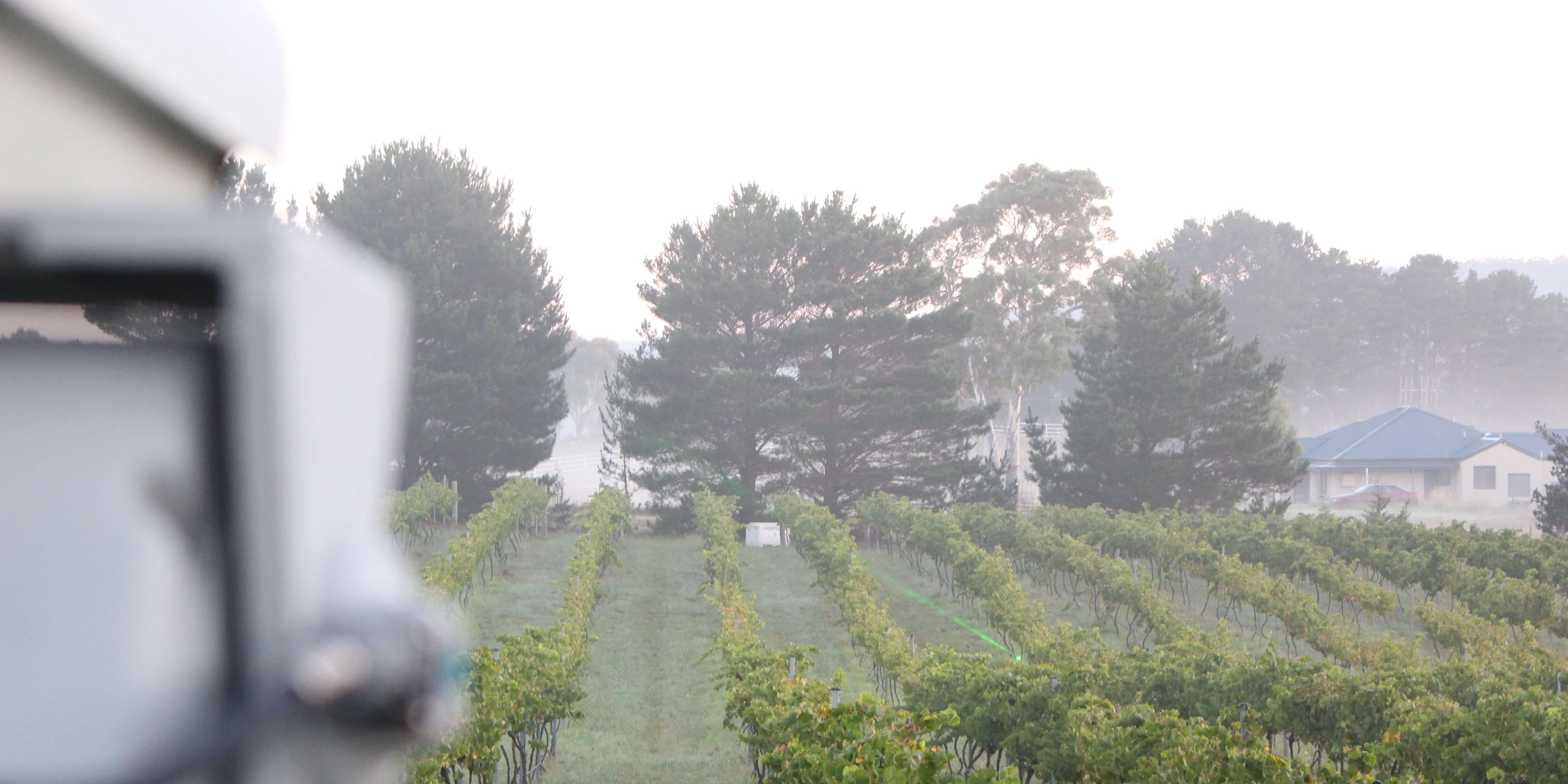 Laser in Vineyard