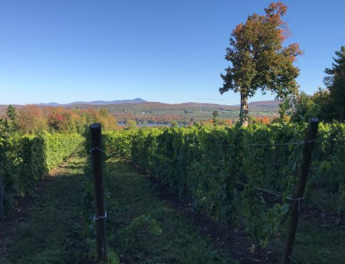 Protected: Vineyard eliminated bird damage by deploying the laser bird repellent