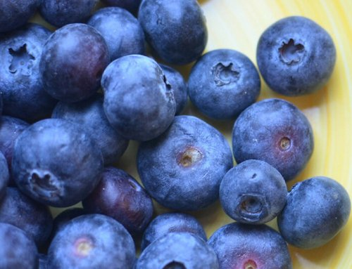 Blueberry growers support U.S. economy