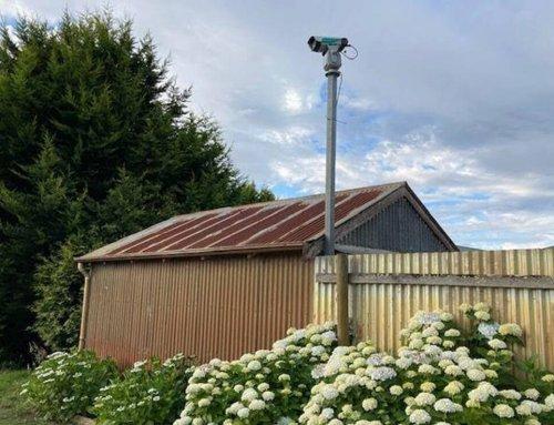 Laser bird repellent reduces crop loss at Tasmanian seed grower