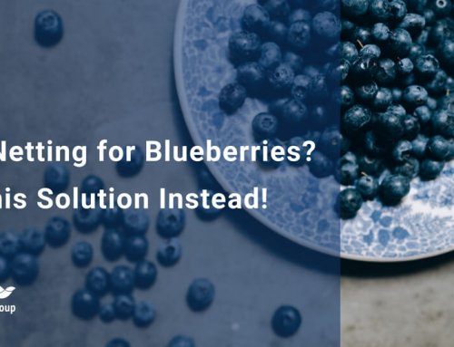 Bird Netting for Blueberries? Try This Solution Instead!