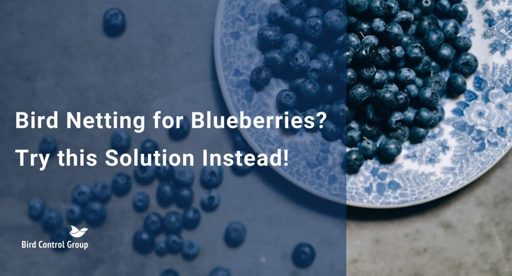 bird netting for blueberries
